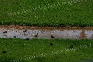 2014-06-20-ZOO-NATURALE-CENTRO-BREAK